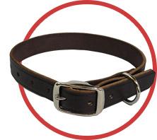leash3